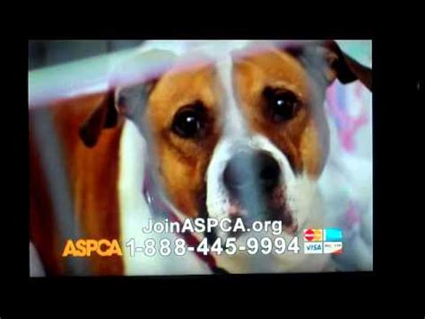 sad commercial sad aspca commercial may 2012 roberta flack time saw your