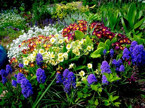 plants gardens garden plants flowering places of original cultivation