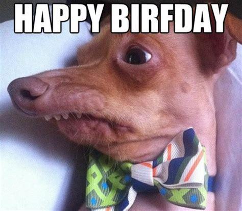 Happy Birthday Meme Dog - happy birthday memes dog wishesgreeting