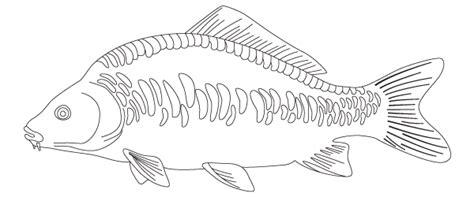 carp coarse code