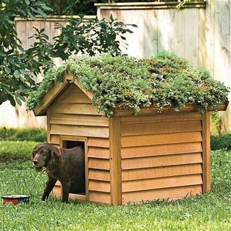 roof dog diy green roof dog veranda your projects obn