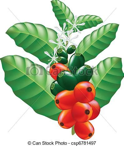 Ilustraciones vectoriales de frutas, flores, café, árbol, vector, Ilustración csp6781497