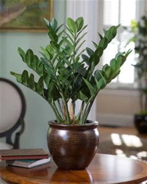 while not a palm this showy plant has large bright green while not a palm this showy plant has large bright green