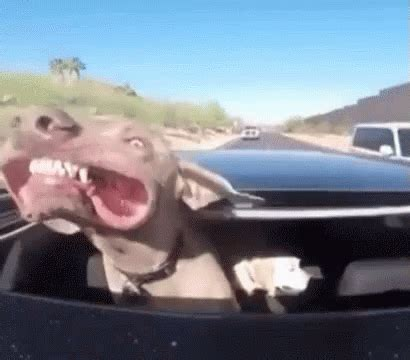 car divertenti happy gif happy car gifs say more with tenor