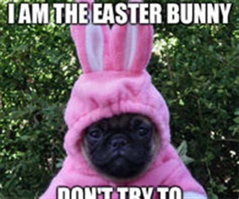 Funny Easter Bunny Memes - easter bunny memes pictures photos images and pics for