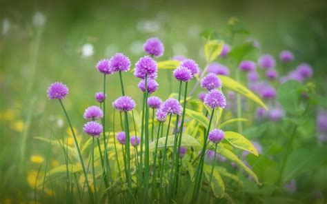 purple flowers bloom grass spring 2560x1600 wallpapers13 com