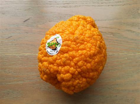strange orange unique fruit the orange fruit