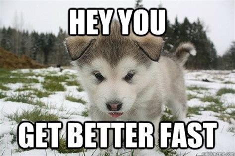 Funny Get Well Meme - 40 pictures of cute and funny husky facial expressions tail and fur