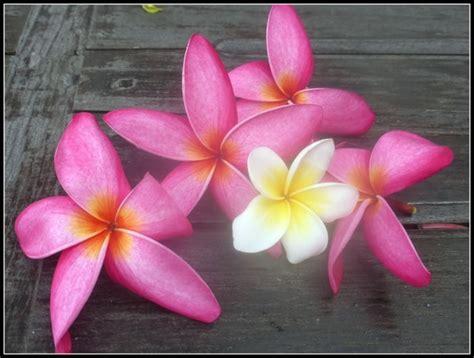 fiori thailandesi fiori thailandesi viaggi vacanze e turismo turisti per