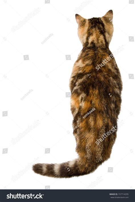 Cat Top cats back top view stock photo 157714295