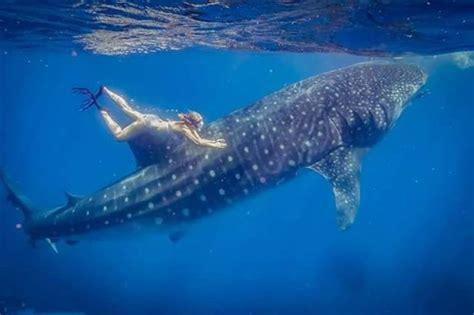 submarine shark attacks woman maui beach fishing maui submarines atlantis submarine maui