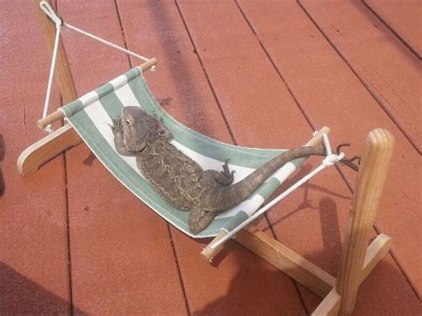 Reptile Hammock i got this hammock at will one of the best purchases ive made she chillin by