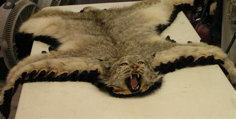 lynx rug lynx rug alaska precision taxidermy