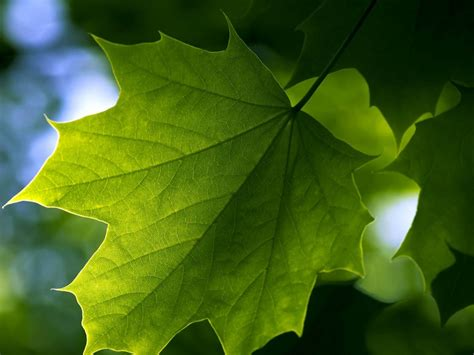 wallpaper with green leaves wallpapers green leaf wallpapers