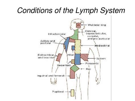 groin area diagram swollen lymph nodes groin anatomy chart