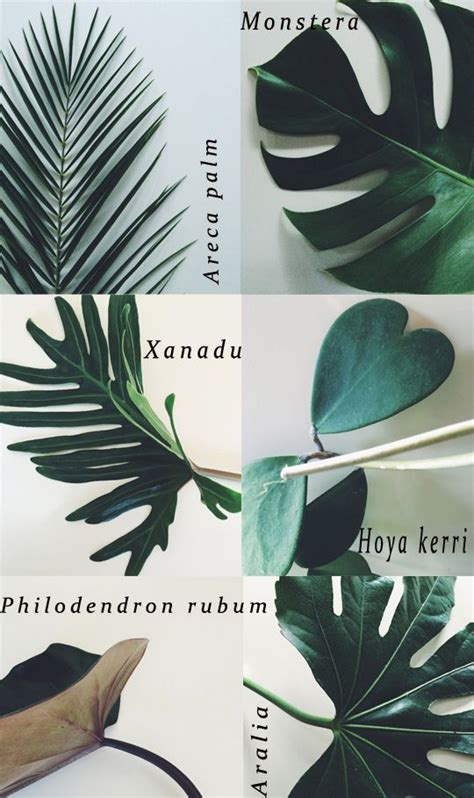 Tanaman Philodendron Monstera Gergaji Xanadu Green Saw 168 best greenery images on green plants