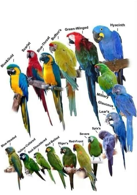 Essay On Different Types Of Birds In by Macaw Types Panama Beautiful And Birds
