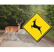 We Need To Move Those Deer Crossing Signs  Radio Clip