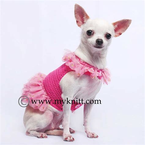 chihuahua puppy clothes 17 best images about myknitt clothes on chihuahuas chihuahua dogs and