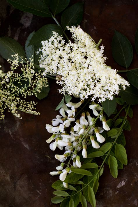 fiori d acacia fritti tempura di fiori di robinia e di sambuco