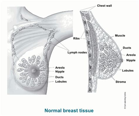 mammary cancer expectancy breast cancer diagnosis symptoms treatment of breast cancer