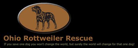 rottweiler rescue ohio ohio rottweiler rescue welcome