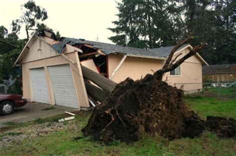 neighbor s tree fell on my house my tree fell on my neighbor s car house fence whatever am i liable