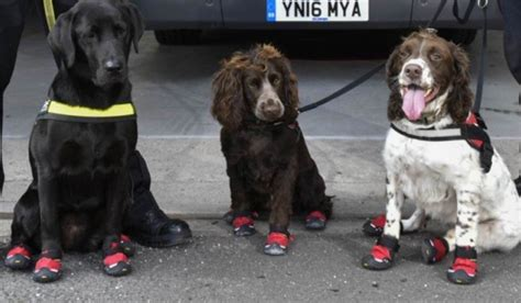tower dogs canine team joins crews in locating victims inside grenfell tower