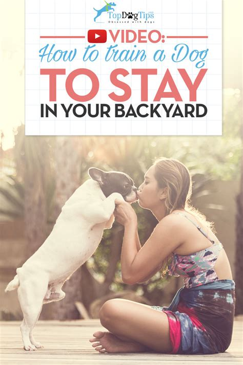 how to to stay in yard how to a to stay in the yard a brief guide top tips