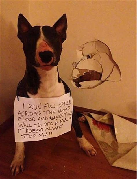 dumb dogs shaming dumb dogs dump a day