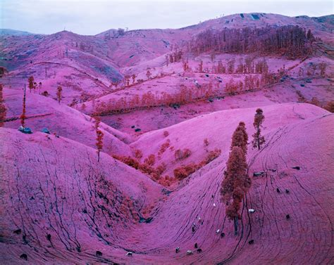 The Battle Of The Pink by Aesthetica Magazine Richard Mosse Falk Visiting