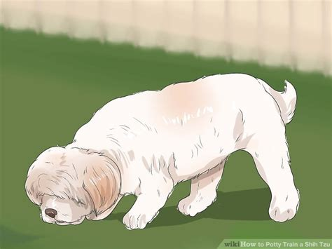 best way to potty a shih tzu 3 ways to potty a shih tzu wikihow