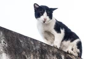black and white cat names 37 awesome names for your cat