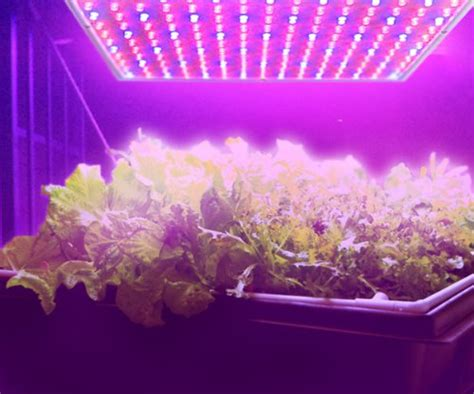 are grow lights bad for your hqrp 225 led blue indoor garden hydroponic plant