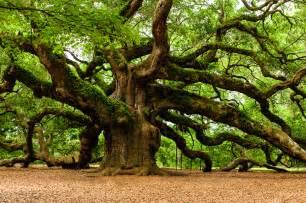 archiwa najwyższe drzewo w ogrodzie wojciech wardecki