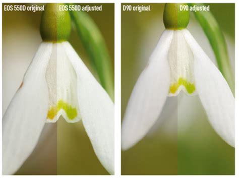 canon eos 550d vs nikon d90 amateur photographer