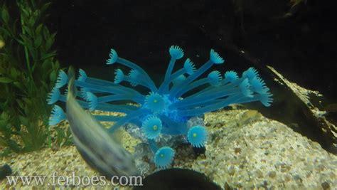 Tumbuhan Coral Artifisial Dekorasi Aquarium dekorasi aquarium artificial coral ferboes