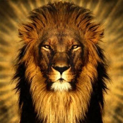 imagenes leones rugiendo leones rugiendo de frente buscar con google leones