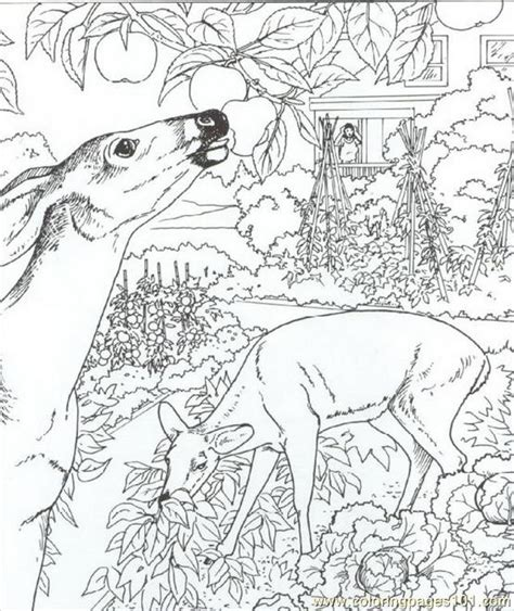 coloring pages for adults deer coloring pages herten animals gt deer free printable