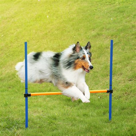 Ae Pulls Dogs Show For Foreseeable Future by Popular Agility Jump Buy Cheap Agility Jump Lots