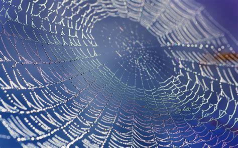 incredible spiderweb wallpapers  water drops