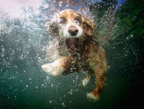 top    big mouth dogs  crazy underwater