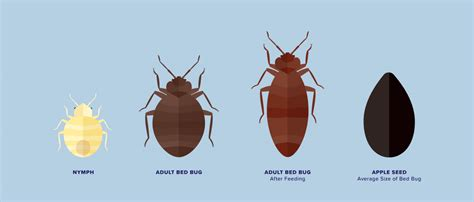 how to know if u have bed bugs how to know if you have bed bugs the dr 246 mma bed