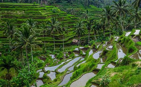 bali full day  packages  day itinerary  top bali