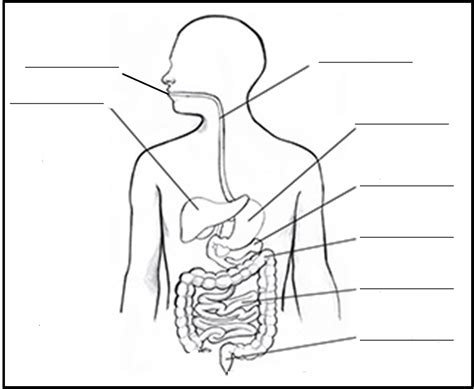 Digestive System Diagram Worksheet by Fpd 4th Grade News And Notes Digestion And Manners