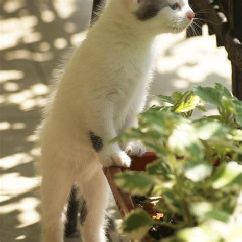 comment fuir les chats ooreka