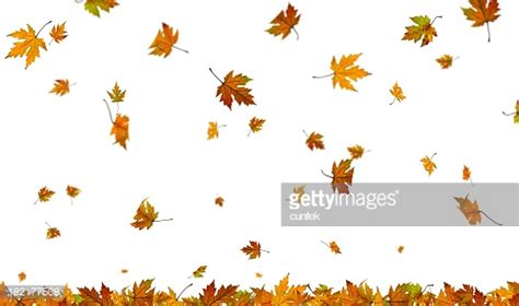 Falling Autumn Leaves On Plain White Background Stock Fall Leaves On White Background