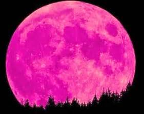 pink moon april musings from the marsh april 2014
