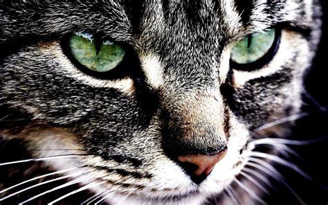 imagenes wallpapers animales los 29 mejores fondos de pantalla o wallpapers de animales