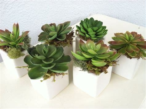 Succulent Vase by Set Of 6 Faux Succulents White Cube Vase